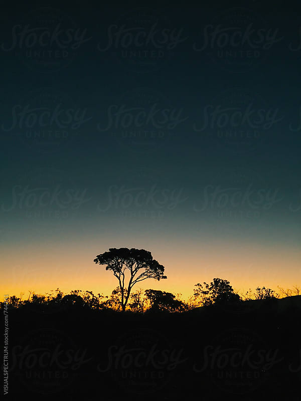Silhouette of Tree After Sundown by Julien L. Balmer for Stocksy United