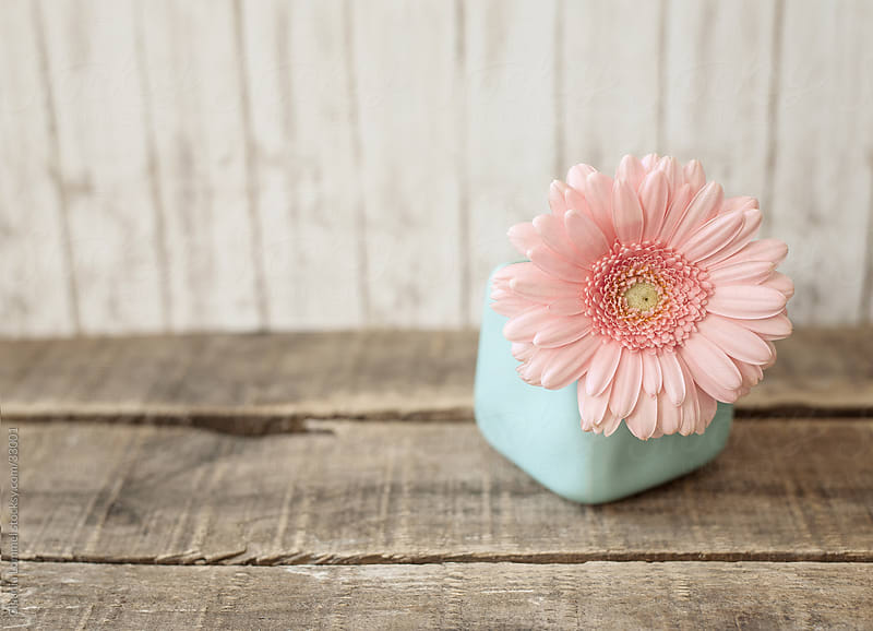 A Pastel Pink Flower in a Pale Blue Vase on a Weathered Wooden Board by Claudia Lommel for Stocksy United