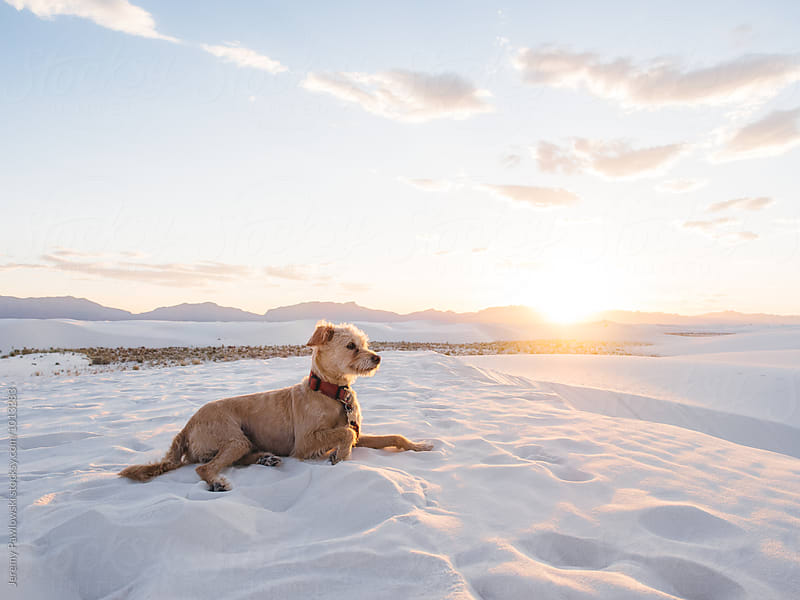 Dog laying in sand with sunset and mountains in background by Jeremy Pawlowski for Stocksy United