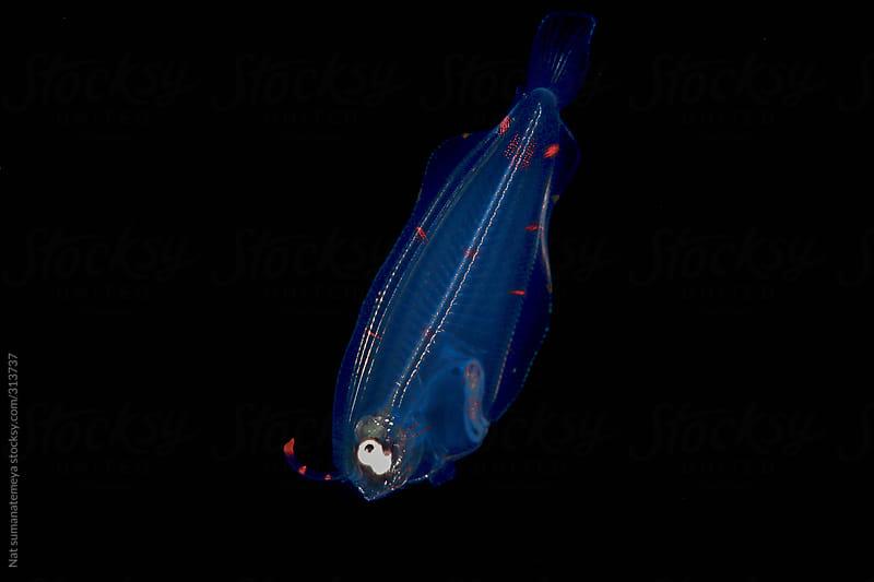 flounder plankton by Nat sumanatemeya for Stocksy United