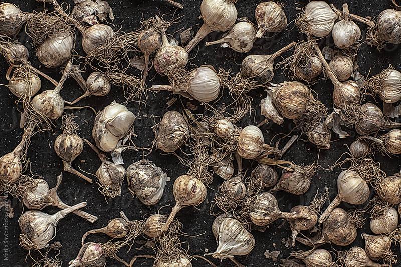 Garlic background. by Marija Savic for Stocksy United