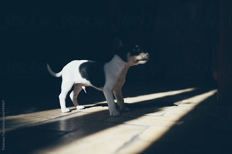 A dog in his new home by Tommaso Tuzj for Stocksy United
