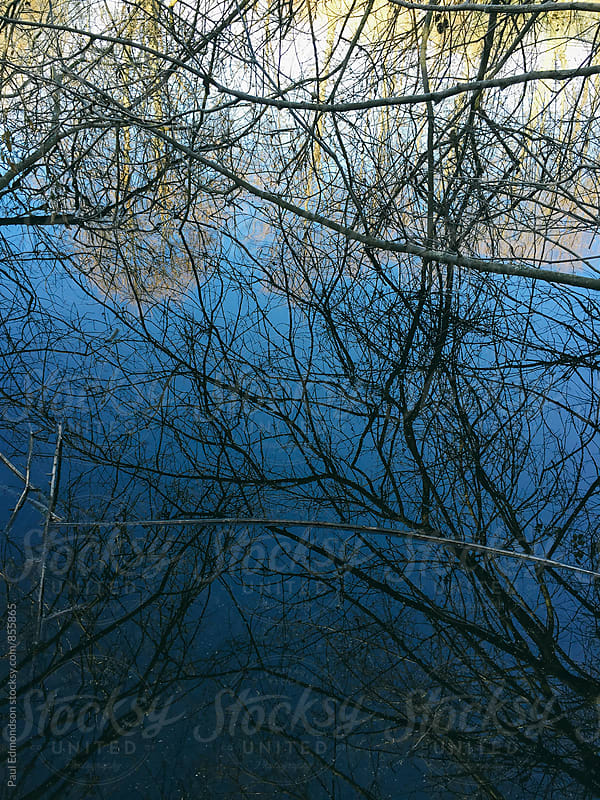 Dense tree branches and calm, blue pond water at dusk by Paul Edmondson for Stocksy United