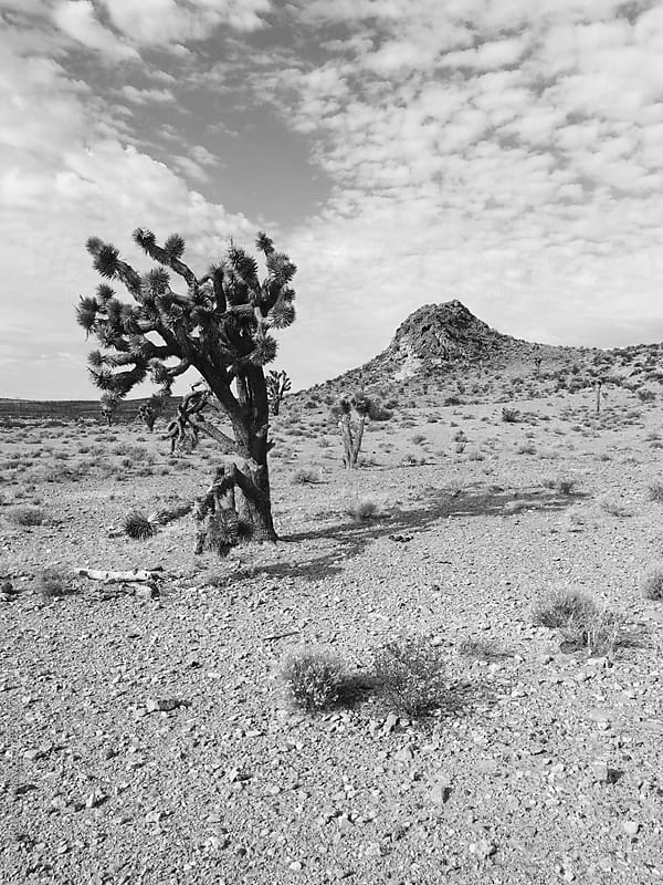 Lone Tree in the Desert by Kevin Russ for Stocksy United