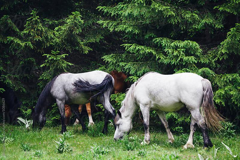 Wild horses by Borislav Zhuykov for Stocksy United
