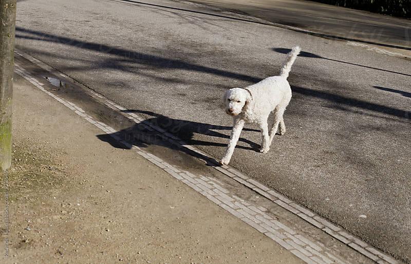 dog  crossing street by Rene de Haan for Stocksy United