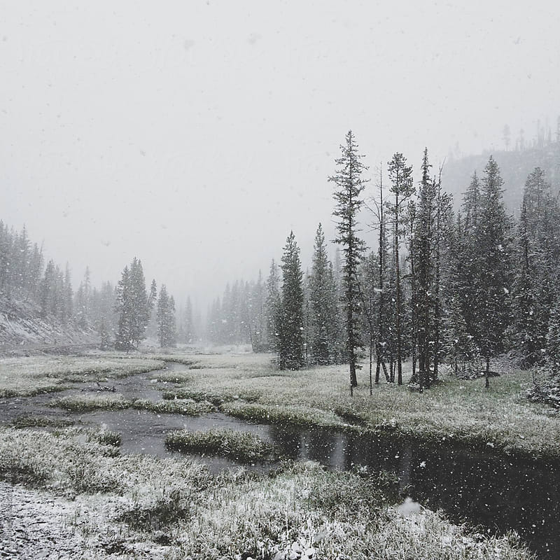 Snowy Forest River by Kevin Russ for Stocksy United