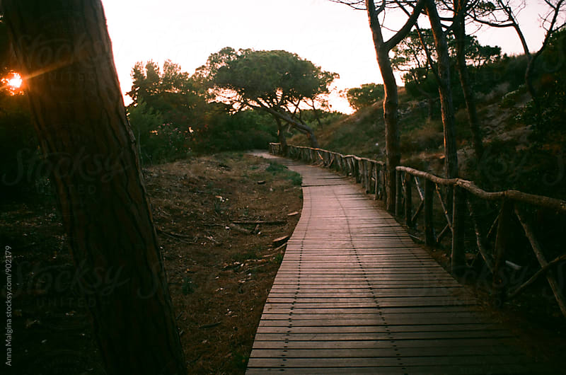 A film photo of way to the sea shot during sunset by Anna Malgina for Stocksy United
