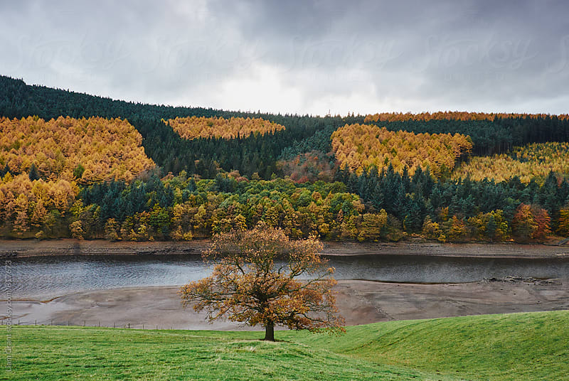 Patchwork of autumnal colour. Derwent Reservoir, Derbyshire, UK. by Liam Grant for Stocksy United