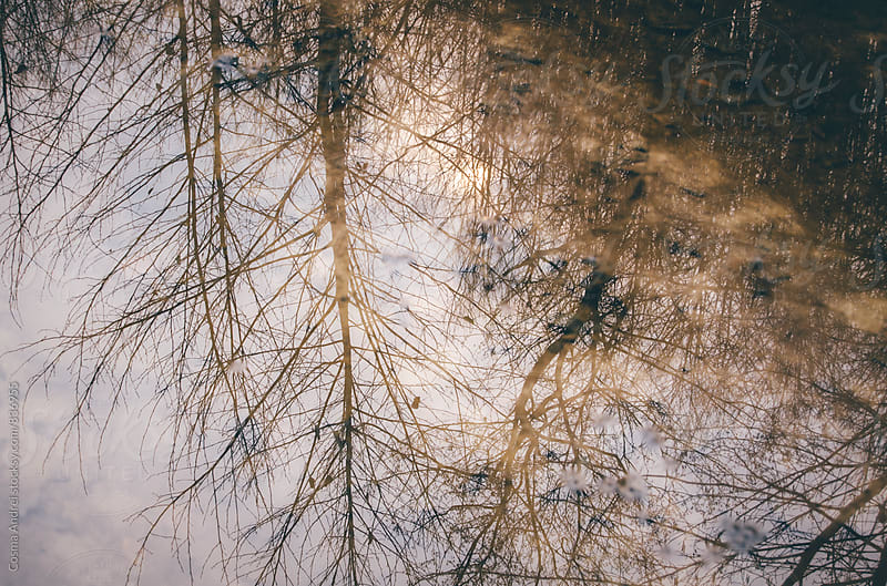 Forest pond reflection by Cosma Andrei for Stocksy United