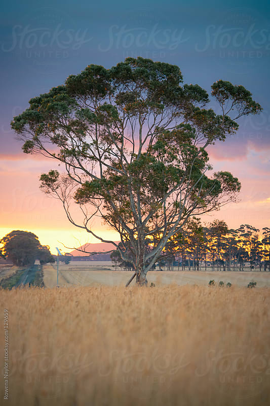 Australian Country Landscape at Sunset by Rowena Naylor for Stocksy United