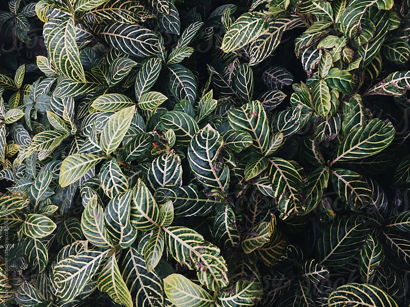 Botanical plant leaves in greenhouse by Daring Wanderer for Stocksy United