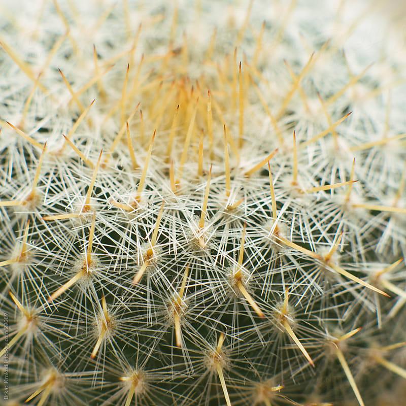 Cactus close up by Branislav Jovanović for Stocksy United