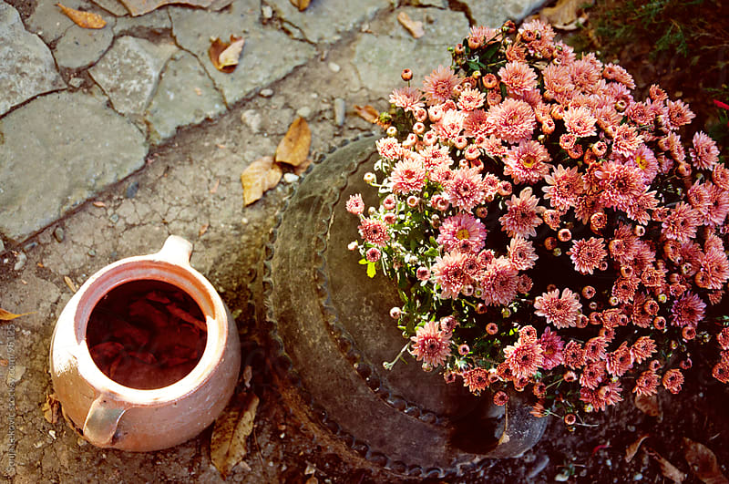 pink flowers and pot by Sonja Lekovic for Stocksy United