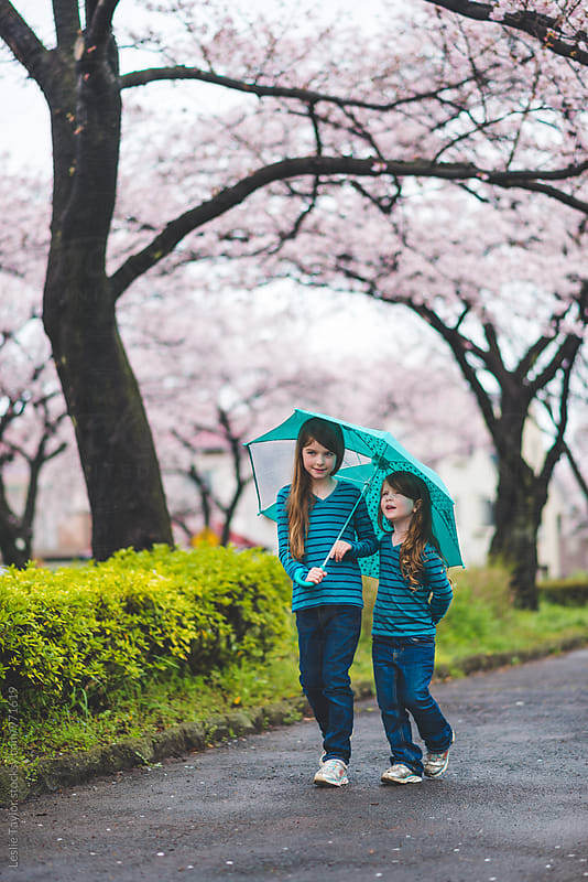Two Girls Walk With An Umbrella Under Cherry Blossoms by Leslie Taylor for Stocksy United
