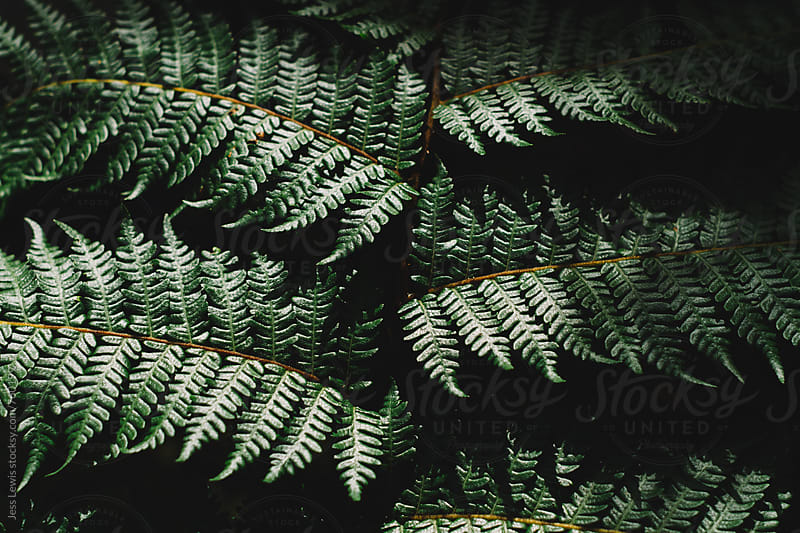 fern leaves from above by Jess Lewis for Stocksy United