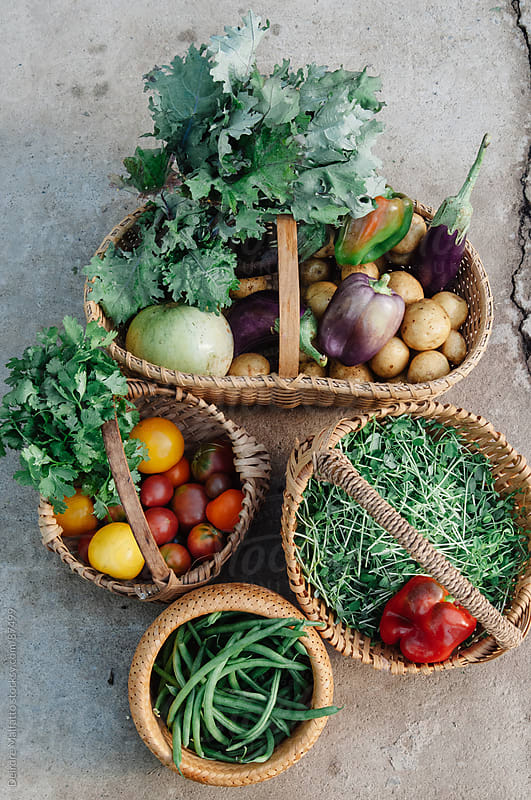 baskets of freshly harvested vegetables by Deirdre Malfatto for Stocksy United