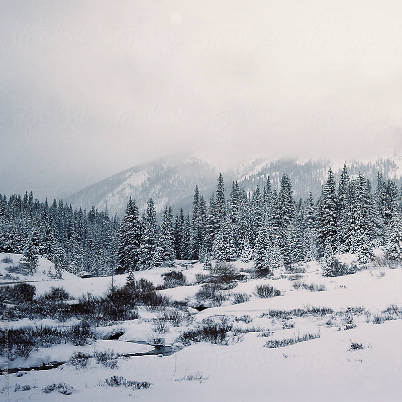 Winter Scene in Colorado by Dave Waddell for Stocksy United