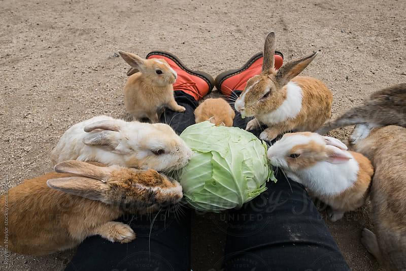 Rabbits on Ōkunoshima (Rabbit Island), Japan by Rowena Naylor for Stocksy United
