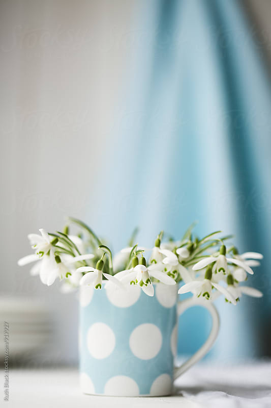 Snowdrops in a china cup by Ruth Black for Stocksy United