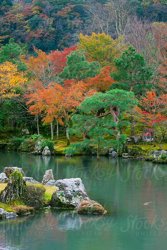 Autumn Tree Color in Kyoto, Japan by Rowena Naylor for Stocksy United