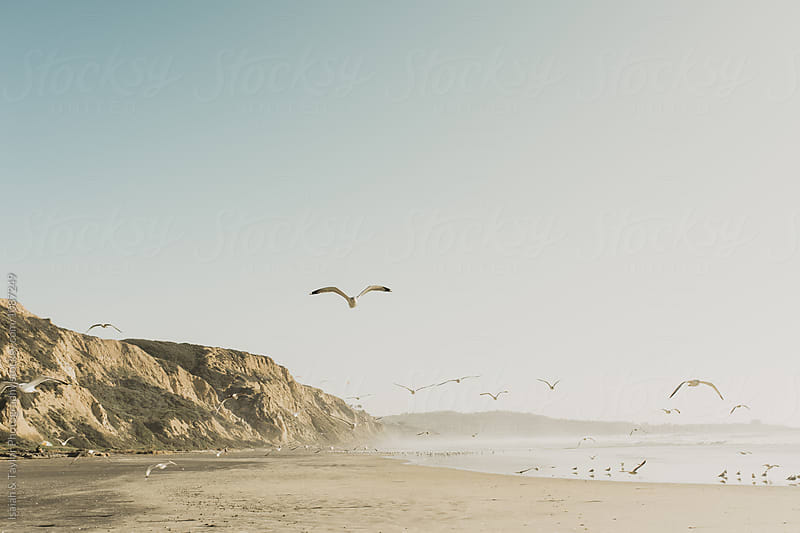 Seagull Beach Landscape by Isaiah & Taylor Photography for Stocksy United