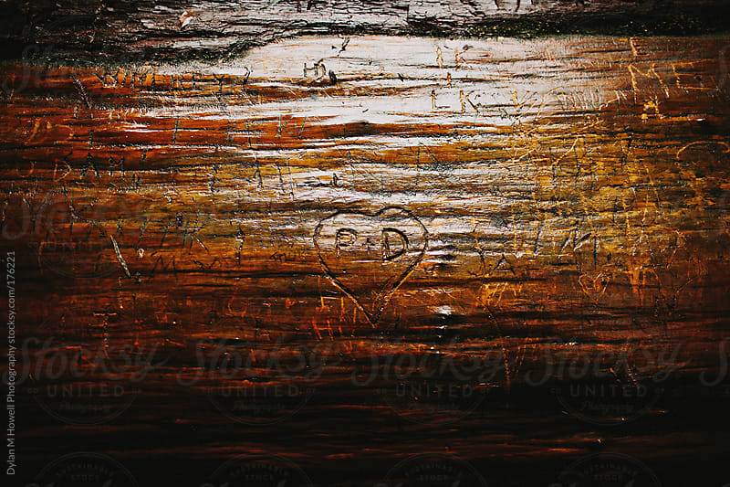 Tree Carvings by Dylan M Howell Photography for Stocksy United