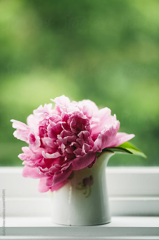pink peony on a window sill  by Kelly Knox for Stocksy United