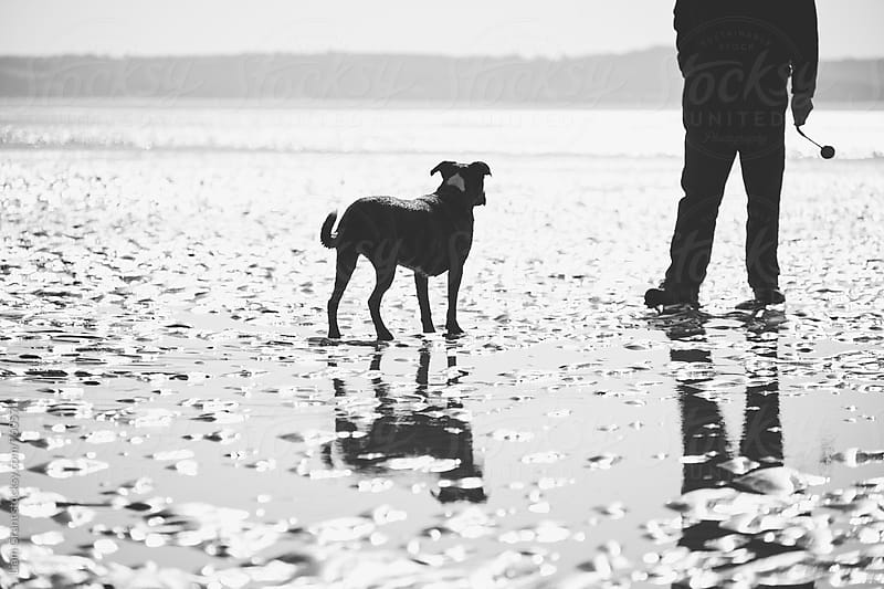 Dog waiting for it's owner to throw a ball on the beach. Wales, UK. by Liam Grant for Stocksy United
