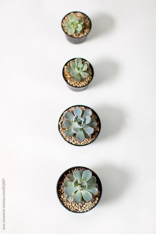 A vertical line of pots with succulents arranged by size  by Jovo Jovanovic for Stocksy United