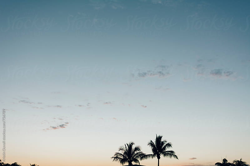 Palm trees aginst sky at sunrise. Florida. by Kristin Duvall for Stocksy United