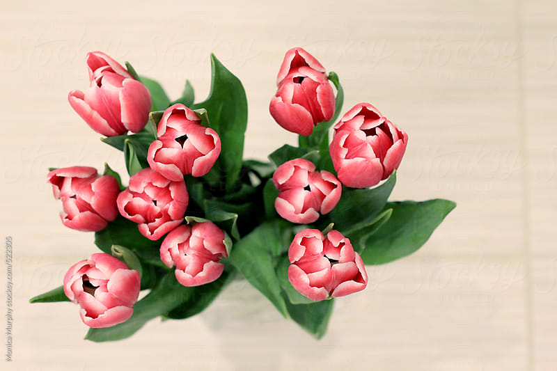 Pink tulips in vase, top view by Monica Murphy for Stocksy United