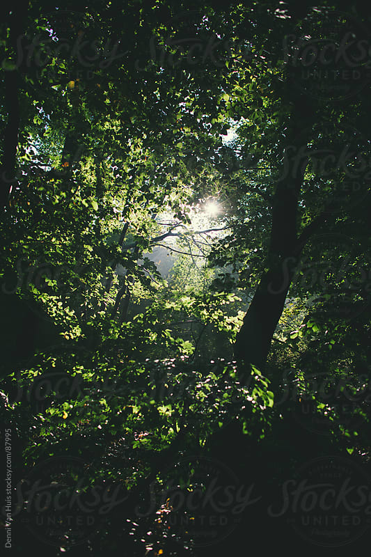 Autumns morning light shining through the leaves of a forest  by Denni Van Huis for Stocksy United