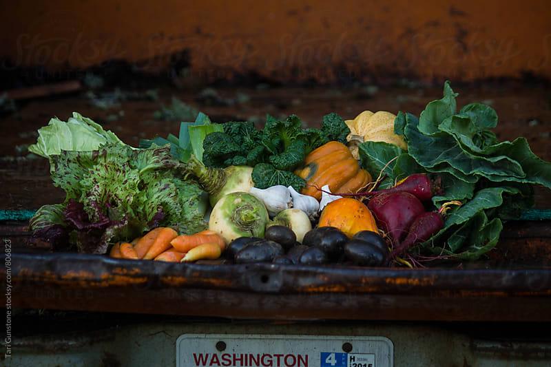 Fresh farm-picked vegetables in truck bed by Tari Gunstone for Stocksy United