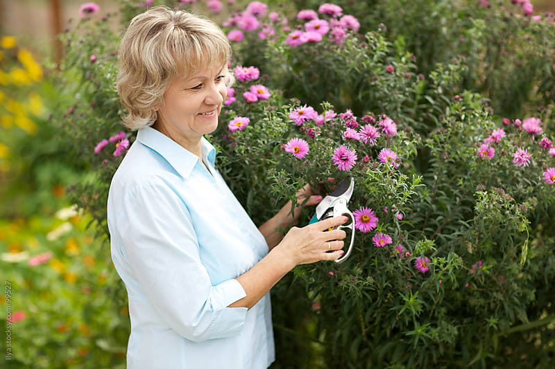 Mature woman gardening cutting flowers on flower bed by Ilya for Stocksy United