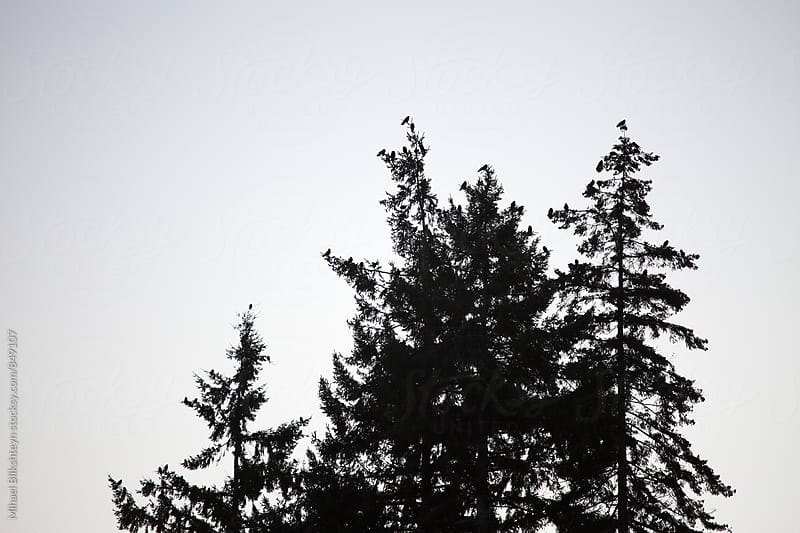 Silhouette of a birds sitting on tree tops by Mihael Blikshteyn for Stocksy United