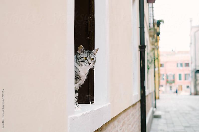 Cat in Venice by Sam Burton for Stocksy United