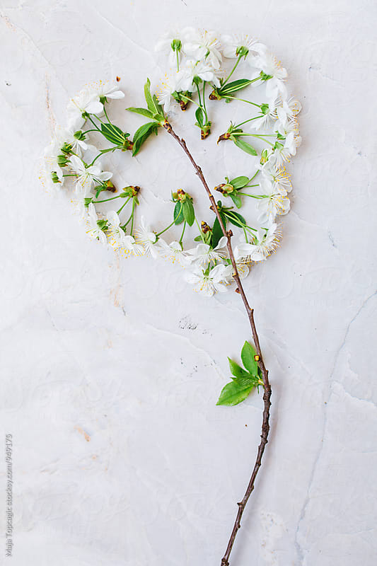 Heart shaped blossom branch on a white background by Maja Topcagic for Stocksy United