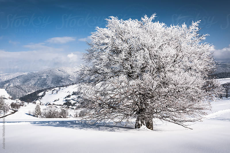 Winter Wonderland Landscape by Andreas Wonisch for Stocksy United