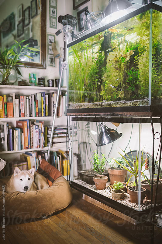 Empty Fish Tank Reuse as Terrarium for Small Plants and Seedlings in Winter by Joselito Briones for Stocksy United