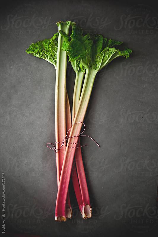 Rhubarb by Sophia van den Hoek for Stocksy United