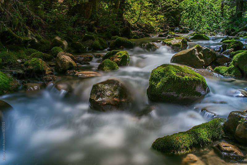 Green forest river by Zocky for Stocksy United