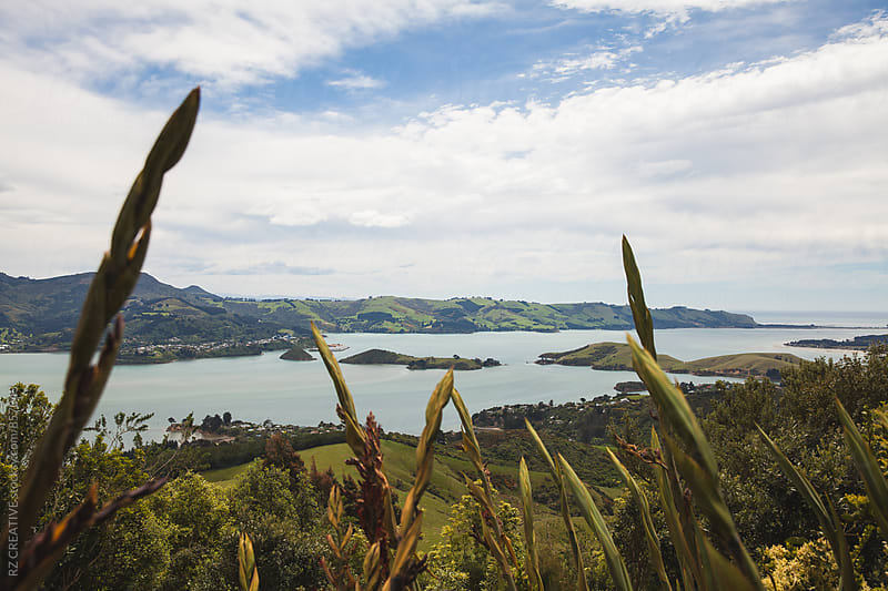 Scenic view of the Otago Peninsula, near Dunedin in the south island of New Zealand. by Robert Zaleski for Stocksy United