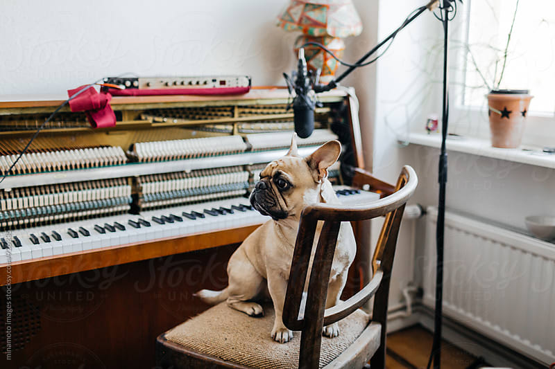 Small dog sitting on a chair. by minamoto images for Stocksy United