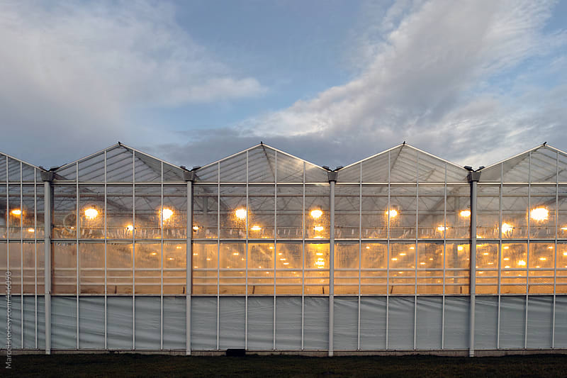 Lighted greenhouse by Marcel for Stocksy United