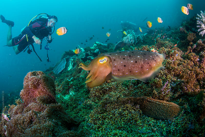 scuba diving with cuttlefish by Song Heming for Stocksy United