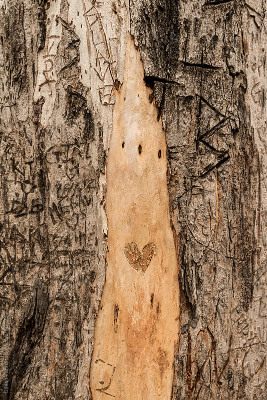 loveheart graffiti on a tree, add your own initials by Gillian Vann for Stocksy United