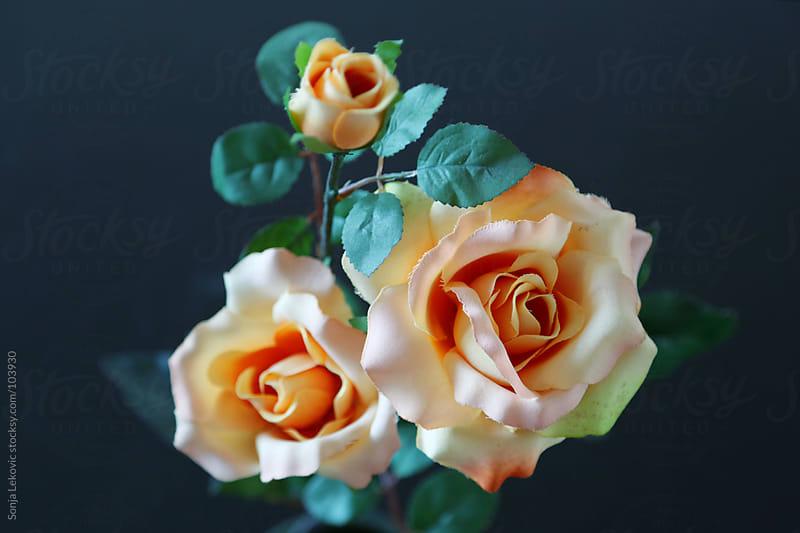 pastel roses by Sonja Lekovic for Stocksy United