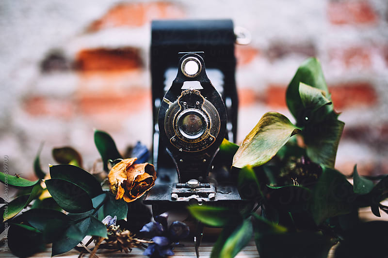 vintage camera with flowers  by Thais Ramos Varela for Stocksy United