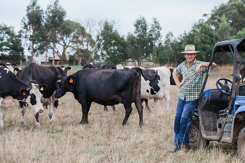 Dairy farmer with herd leaning against farm vehicle by Rowena Naylor for Stocksy United